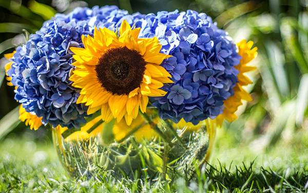 05.紫陽花とヒマワリのブーケを撮影した綺麗な写真壁紙画像