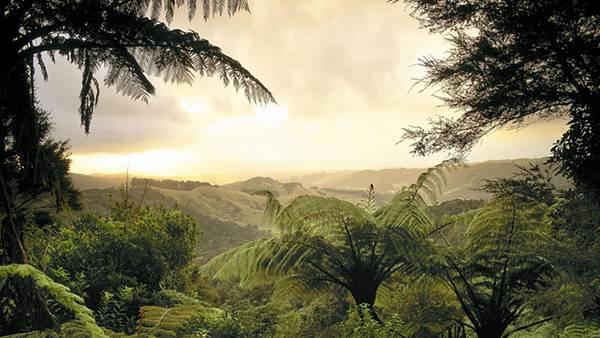 03.木々の生い茂るうっそうとしたジャングルの写真壁紙画像