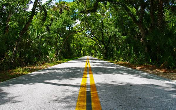 11.ジャングルの中を通る道路を撮影した写真壁紙画像