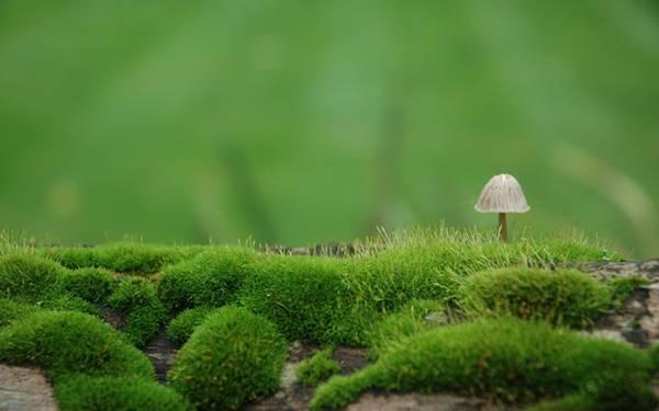 04.苔の中の小さなきのこを浅い被写界深度で撮影した写真壁紙画像