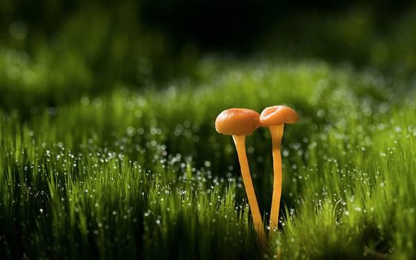 09.短い草ときのこをマクロ撮影した綺麗な写真壁紙画像