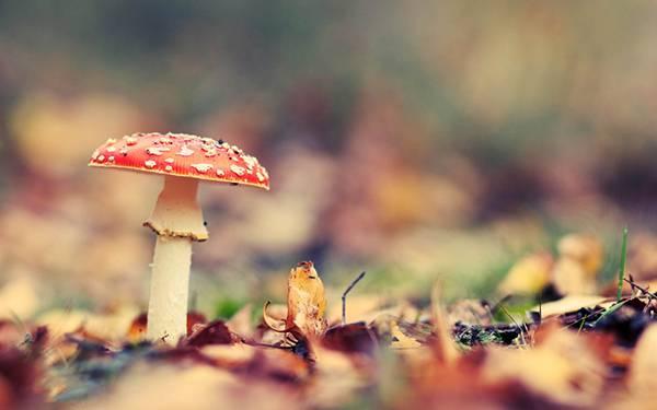 10.赤い茸をマクロ撮影した可愛い写真壁紙画像