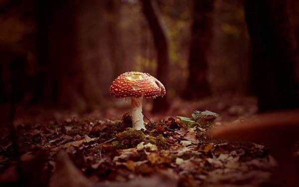 11.森の中の茸をアップで撮影した幻想的な写真壁紙画像