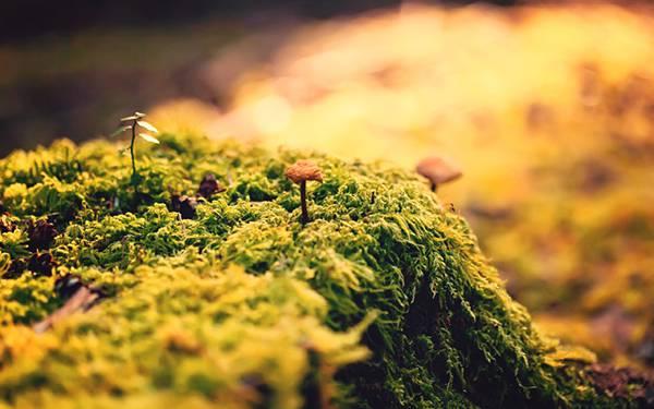 12.苔の生えた地面ときのこを撮影した可愛い写真壁紙画像