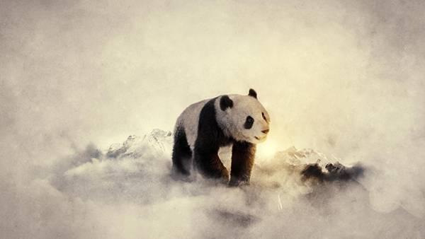 06.霧の中のパンダをリアルに描いた綺麗なイラスト壁紙画像
