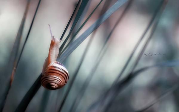 02.草の上をよじ登るカタツムリの綺麗な写真壁紙画像