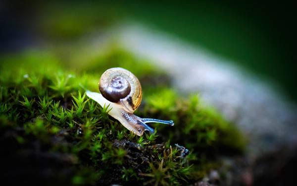 03.短い草の上のかたつむりを撮影した可愛い写真壁紙画像