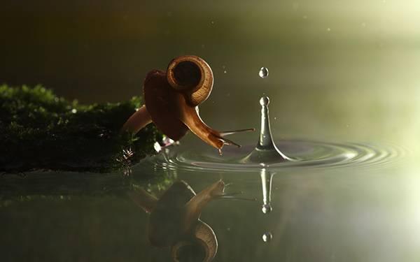 07.カタツムリと水しぶきを撮影した可愛い写真壁紙画像