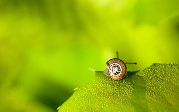 08.葉っぱの上のカタツムリの殻ろ角の可愛い写真壁紙画像