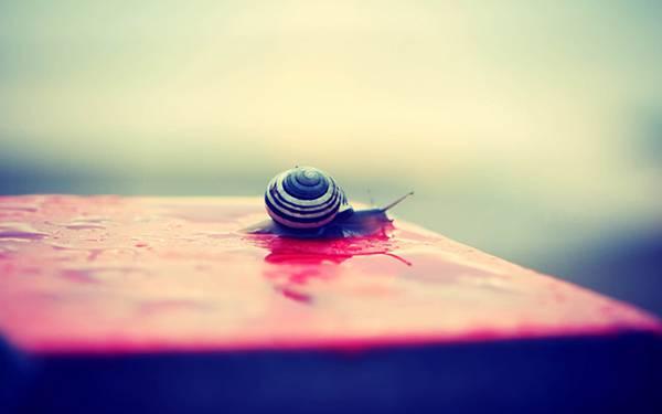 10.赤い床の上を這うカタツムリの可愛い写真壁紙画像