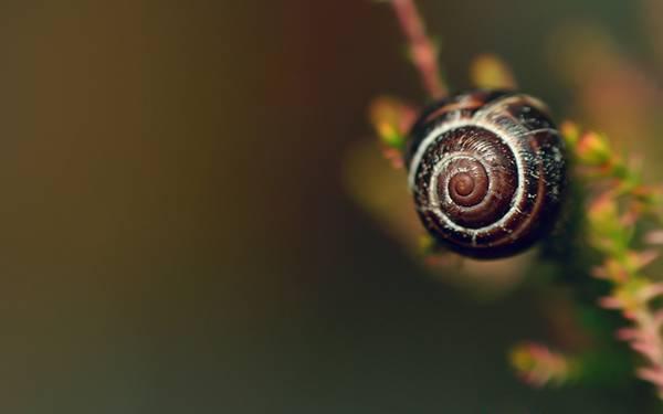 12.カタツムリの殻を浅い被写界深度で撮影した綺麗な写真壁紙画像