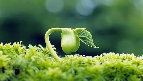 01.新芽をマクロ撮影した美しい写真壁紙画像