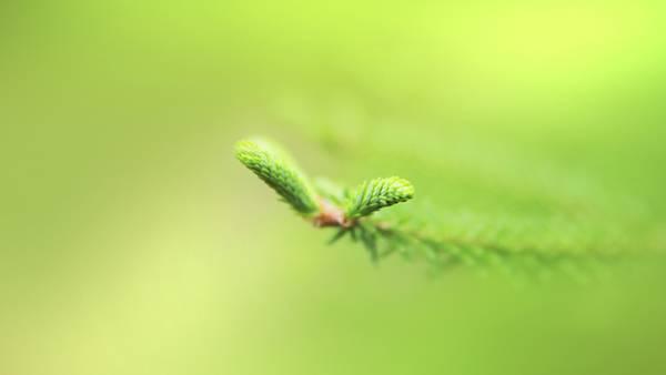 02.細かい葉をマクロ撮影したシンプルで綺麗な写真壁紙画像