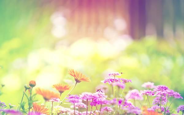 花の蜜を吸う蜂をハイキーで撮影した可愛い写真壁紙画像