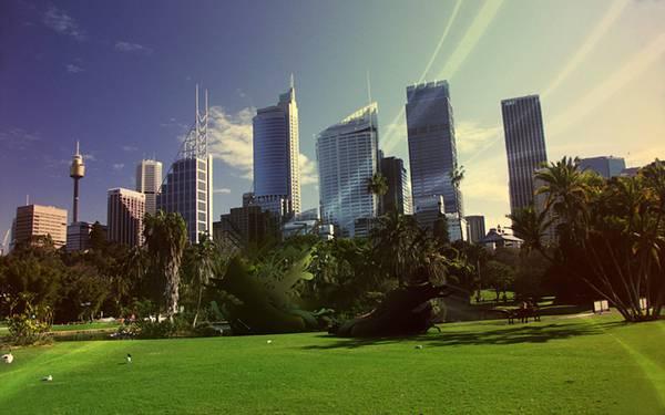 10.シドニーの公園を撮影した爽やかな写真壁紙画像