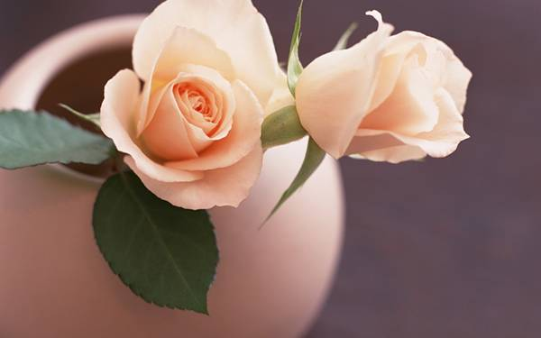 01.ピンク色の花瓶に入ったピンクの薔薇の美しい写真壁紙画像