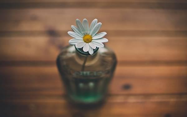 02.ビンに挿した白い花をを浅い被写界深度で撮影した写真壁紙画像