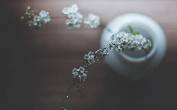 03.白い花瓶に挿した細かい花の美しい写真壁紙画像