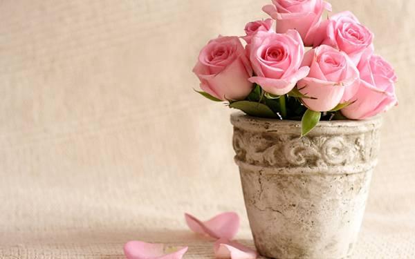 05.たくさんの鮮やかなピンク色の薔薇の美しい写真壁紙画像