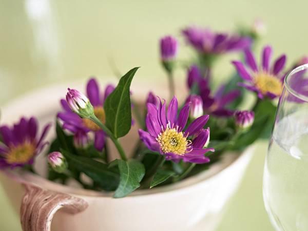09.紫の花をアップでマクロ撮影した美しい写真壁紙画像
