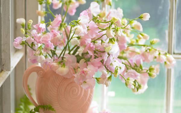 12.窓際に置いた淡いピンク色の花の美しい写真壁紙画像
