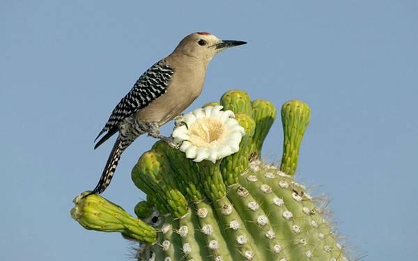 11.サボテンの上に止まった鳥を撮影した可愛い写真壁紙画像