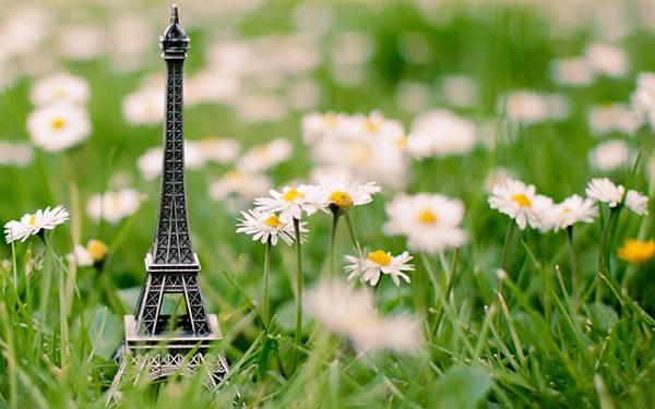 04.エッフェル塔の置物と草とデイジーの花のおしゃれな写真壁紙画像