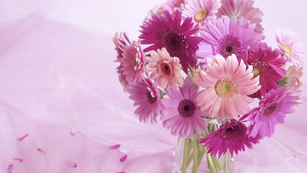 07.花瓶に挿した紫色のデイジーの花の美しい写真壁紙画像
