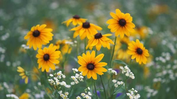 08.黄色いデイジーの花を撮影した綺麗な写真壁紙画像