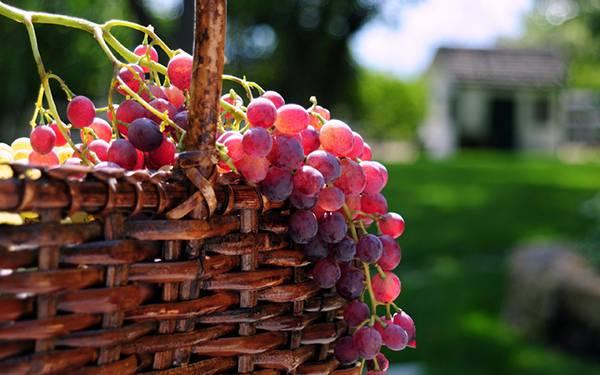 06.カゴからあふれる葡萄の実を撮影した綺麗な写真壁紙画像
