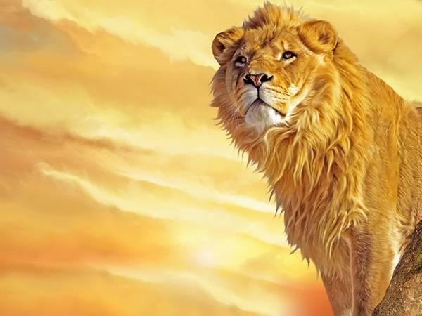 08.夕焼けの中のライオンをリアルに描いた綺麗なイラスト壁紙画像