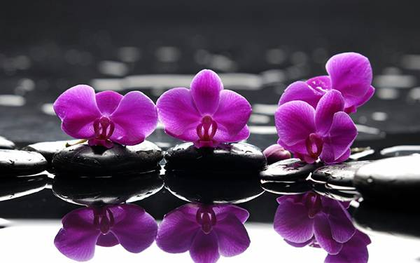 04.石と水に映る3つの蘭を撮影した写真壁紙画像
