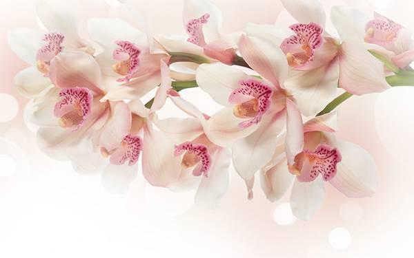 06.淡い紫の蘭の花達を撮影したオシャレな写真壁紙画像