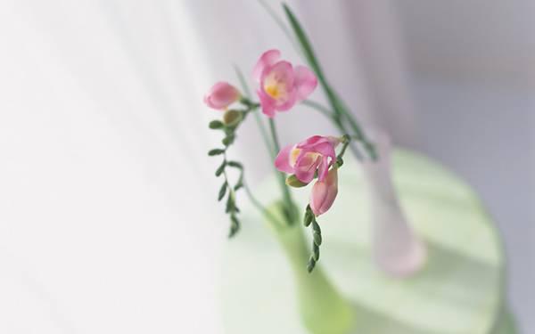 07.花瓶にさした蘭の花を撮影したおしゃれな写真壁紙画像