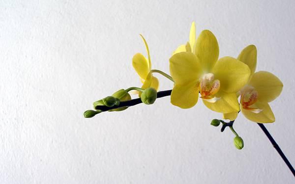 11.壁際の黄色い蘭の花を撮影した美しい写真壁紙画像
