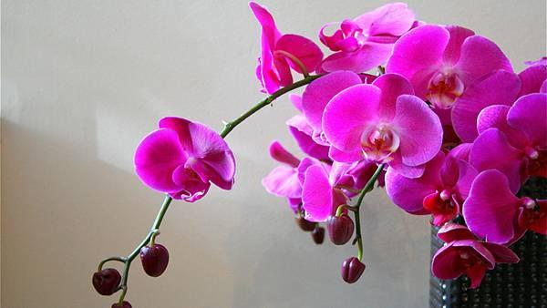 12.花瓶にさした鮮やかな紫色の蘭の花の写真壁紙画像