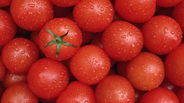 03.積み重ねた水のついたフレッシュなトマトの綺麗な写真壁紙画像