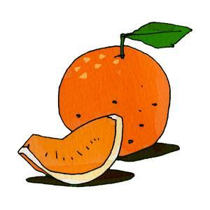 オレンジの無料イラスト