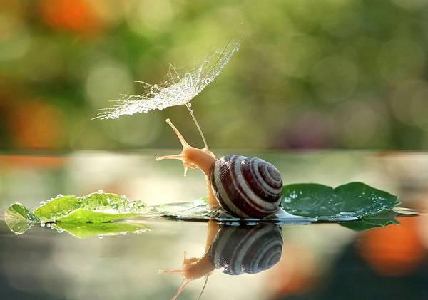 まさにファンタジー!カタツムリの世界をマクロ撮影した美しい写真作品シリーズ - 01