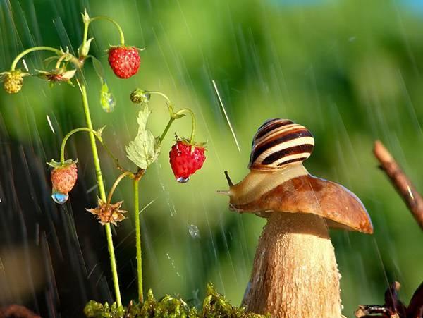 まさにファンタジー!カタツムリの世界をマクロ撮影した美しい写真作品シリーズ - 02