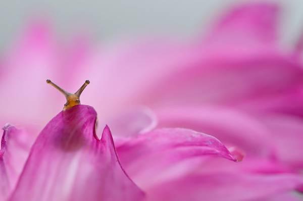 まさにファンタジー!カタツムリの世界をマクロ撮影した美しい写真作品シリーズ - 03