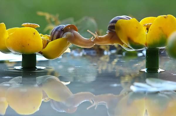 まさにファンタジー!カタツムリの世界をマクロ撮影した美しい写真作品シリーズ - 04