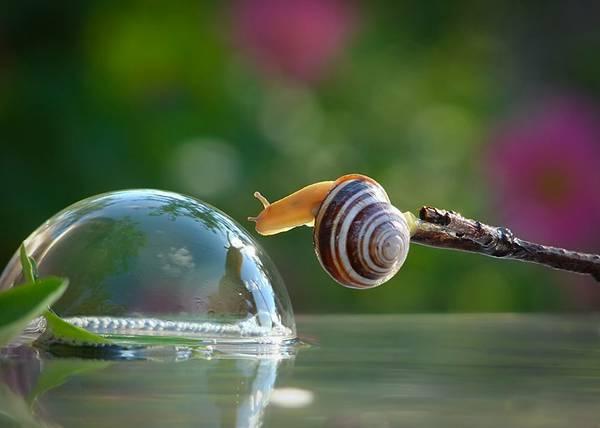 まさにファンタジー!カタツムリの世界をマクロ撮影した美しい写真作品シリーズ - 05