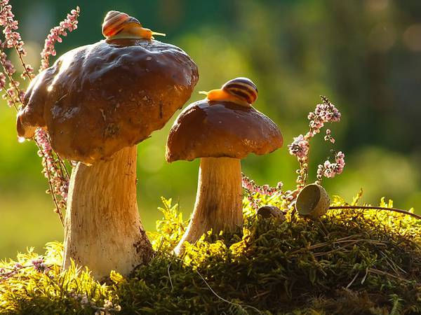 まさにファンタジー!カタツムリの世界をマクロ撮影した美しい写真作品シリーズ - 07