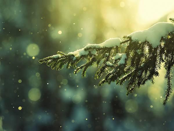 01.雪の積もった樹の枝を玉ボケを活かして撮影した写真壁紙画像