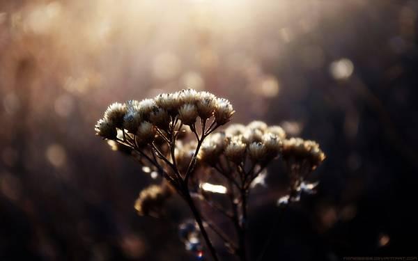 04.花の綿毛を浅い被写界深度で撮影した美しい写真壁紙画像
