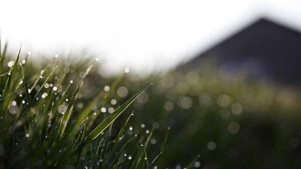 09.みずみずしい草を浅い被写界深度で撮影した綺麗な写真壁紙画像