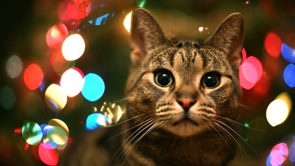 12.猫とカラフルな玉ボケの可愛い写真壁紙画像