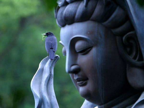 12.仏像に止まった青い鳥を撮影した美しい写真壁紙画像