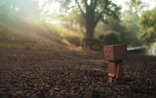 09.柔らかく差し込む光と砂利道を歩くダンボーの可愛い写真壁紙画像